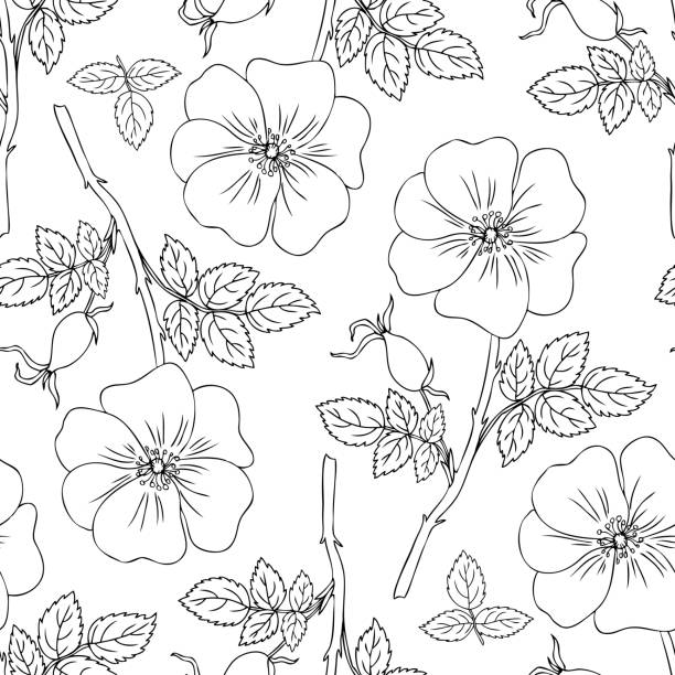 Seamless pattern Wild rose, briar hand drawn dogrose vector illustration isolated on white background, decorative rosehip line art for design cosmetic, natural medicine, herbal tea,health organic food Seamless pattern Wild rose, briar hand drawn dogrose vector illustration isolated on white background, decorative rosehip line art for design cosmetic, natural medicine, herbal tea,health organic food wild rose stock illustrations