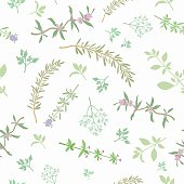 Seamless Pattern With Aromatic Herbs