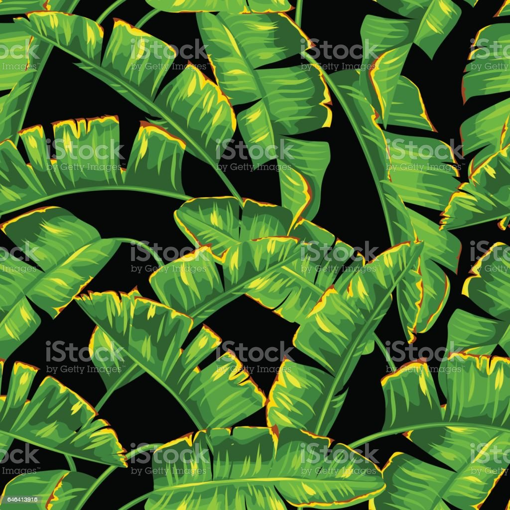 Seamless pattern with banana palm leaves. Decorative tropical foliage vector art illustration