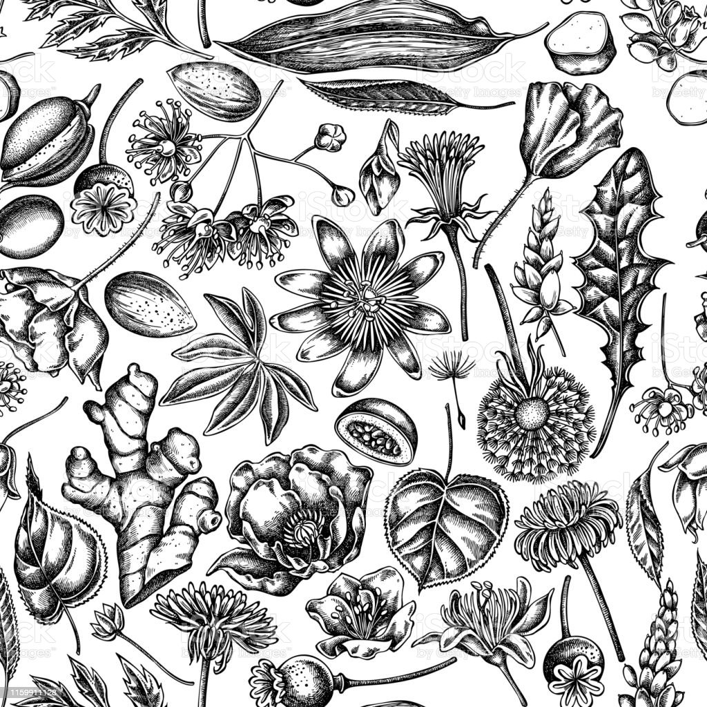 Seamless pattern with black and white almond, dandelion, ginger,...