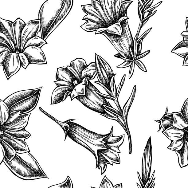 stockillustraties, clipart, cartoons en iconen met naadloos patroon met zwart-wit gentiana - gentiaan