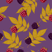 Seamless pattern with blackberries and raspberries and ash leaves. Vector image