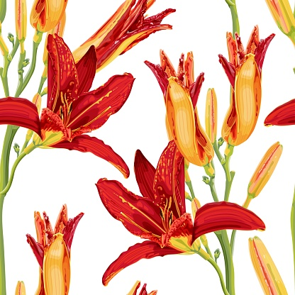 Seamless pattern with bright red and yellow daylily flowers. Botanical illustration with hemerocallis flowers.