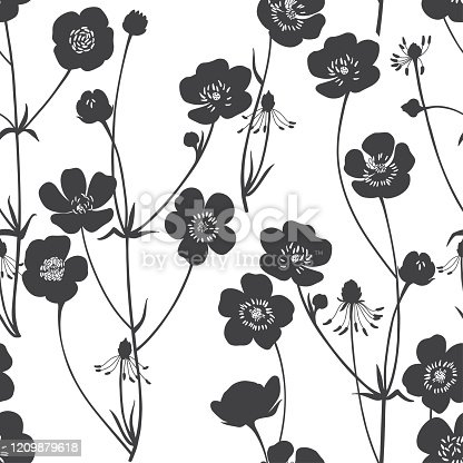 Buttercups. Flowering wildflowers. Vector. Black and white illustration. Nature background.