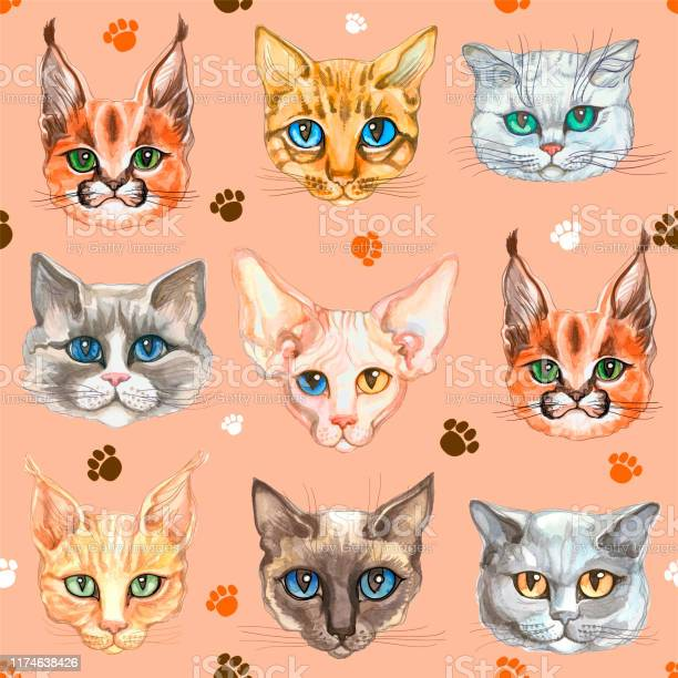 Seamless pattern with cat faces of different breeds watercolor vector vector id1174638426?b=1&k=6&m=1174638426&s=612x612&h=vdnyvf2wwrfrarzd0xurebup7kbkc4qtmoosu0mnxba=