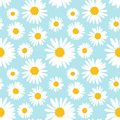 Seamless pattern with chamomile flowers on blue background. Vector illustration.