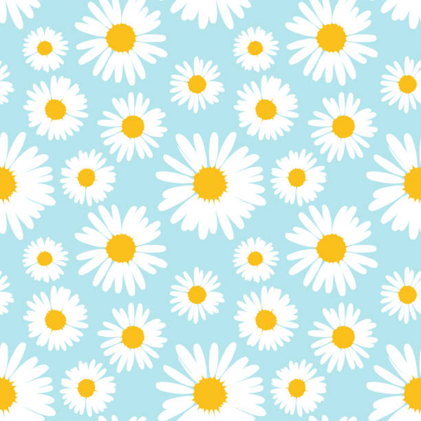 Seamless pattern with chamomile flowers on blue background. Seamless pattern with chamomile flowers on blue background. Vector illustration. daisy stock illustrations