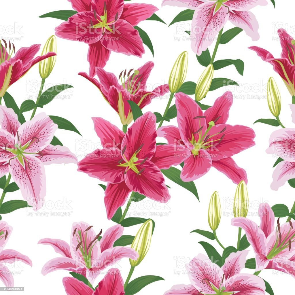 Seamless Pattern With Colorful Lilies Flower On White Background