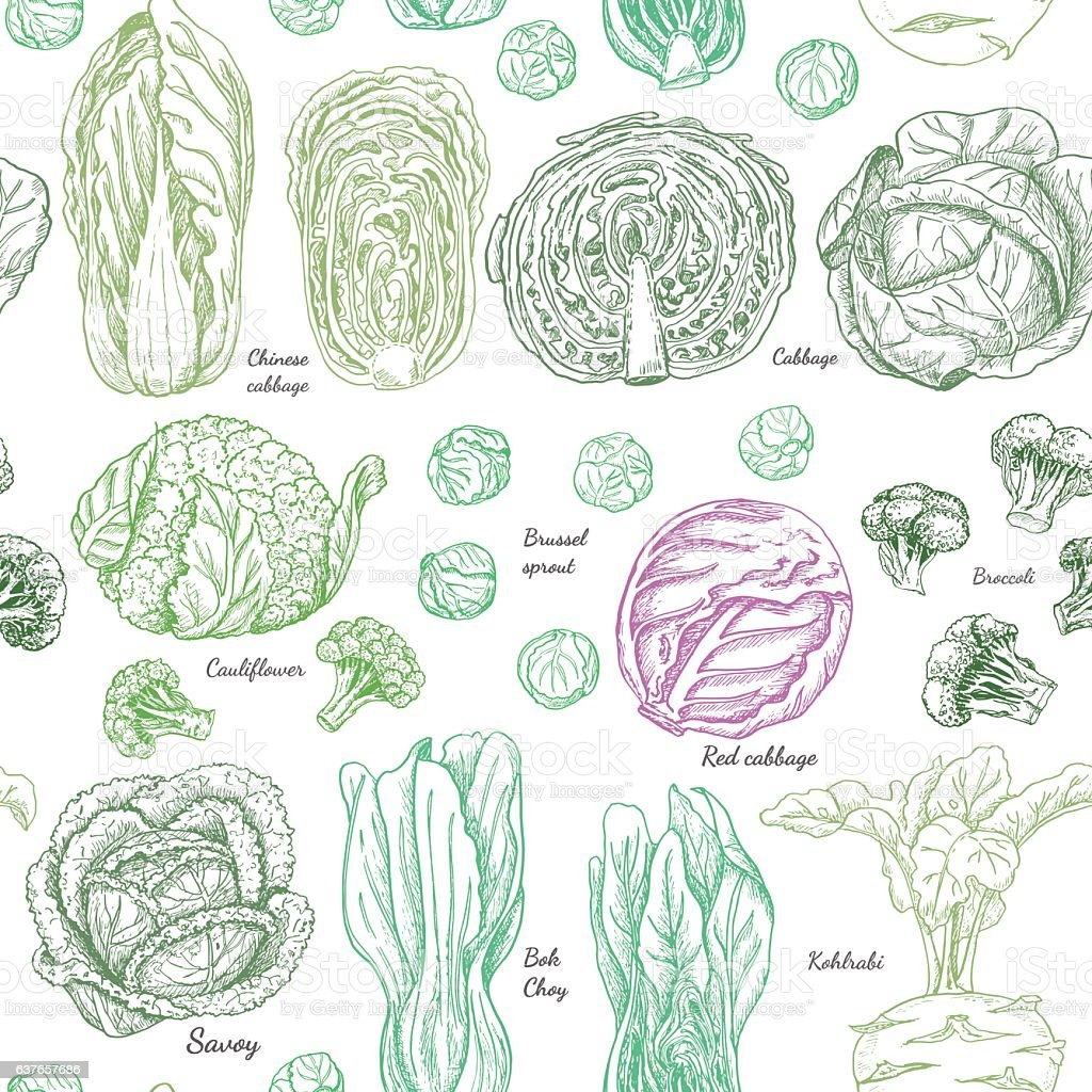 Seamless pattern with different cabbages vector art illustration