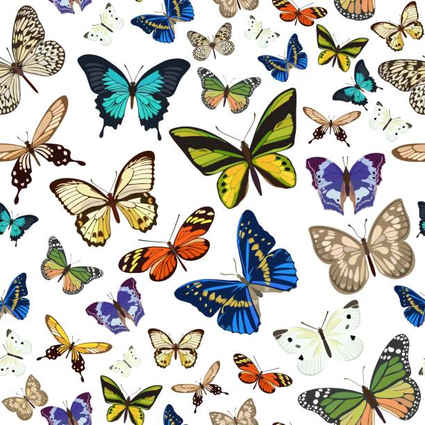 illustrazioni stock, clip art, cartoni animati e icone di tendenza di seamless pattern with different types of multicolored butterflies. vector illustration. - impollinazione