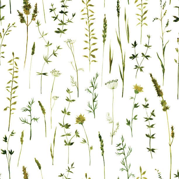 bezszwowe wzór z kwiatów i traw - gałązka stock illustrations