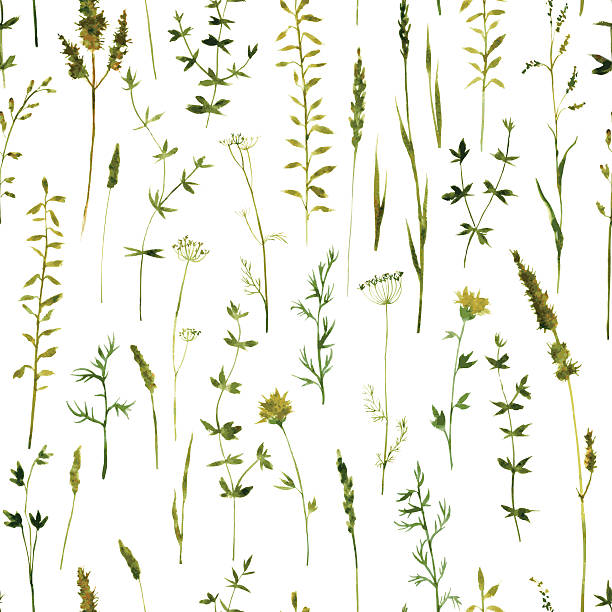 seamless pattern with flowers and grass - wildflowers stock illustrations, clip art, cartoons, & icons