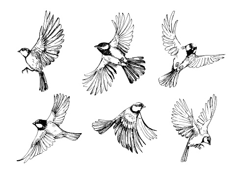 Seamless pattern with flying birds. Titmouse sketch. Outrline with transparent background. Hand drawn illustration converted to vector