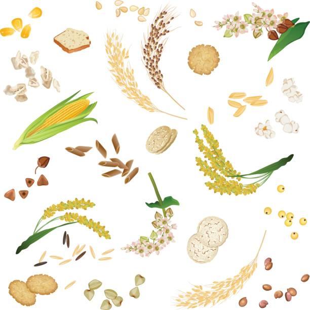 ilustrações de stock, clip art, desenhos animados e ícones de seamless pattern with gluten free cereal foodstuff - quinoa