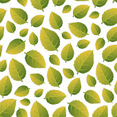 Seamless pattern with green leaves. The tea leaves are distributed on the surface.