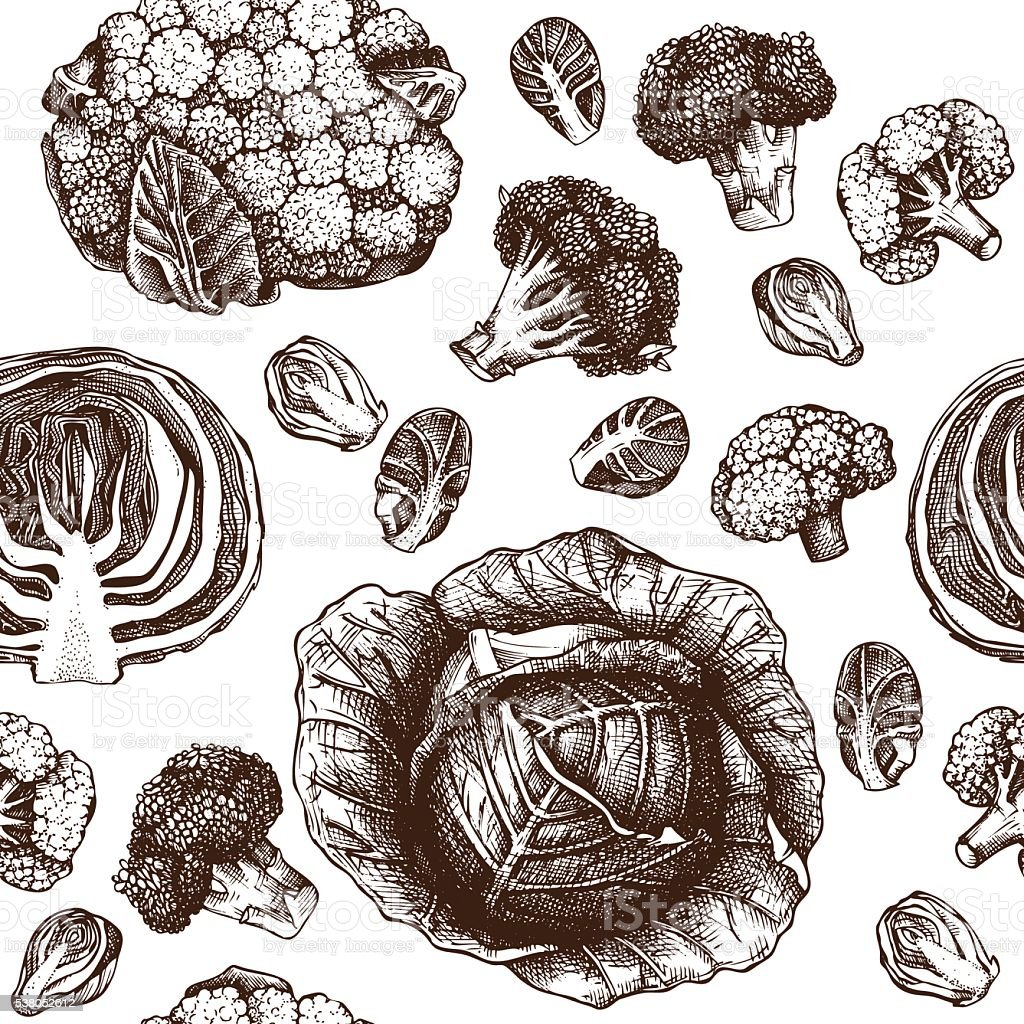 Seamless pattern with Hand drawn cabbage illustration. vector art illustration