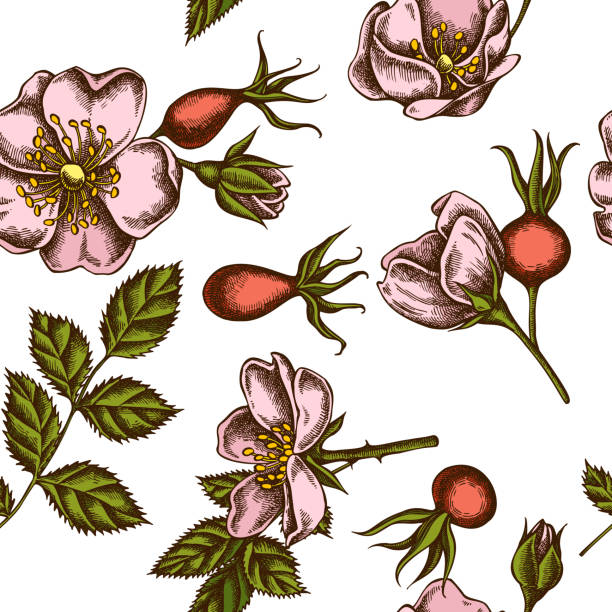 Seamless pattern with hand drawn colored dog rose Seamless pattern with hand drawn colored dog rose stock illustration dog rose stock illustrations