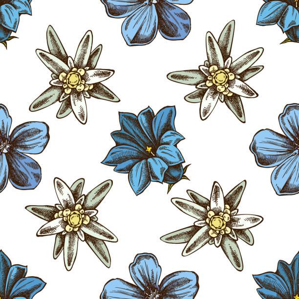 stockillustraties, clipart, cartoons en iconen met naadloze patroon met hand getekende gekleurde edelweiss, weide geranium, gentiana - gentiaan