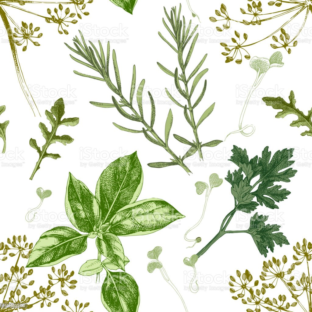 Seamless pattern with hand drawn herbs vector art illustration