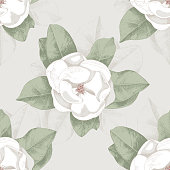 beautiful magnolia soulangeana isolated on white