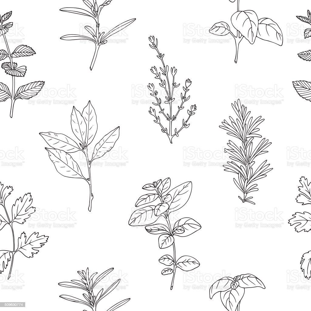 Seamless pattern with hand drawn spicy herbs. Monochrome kitchen background vector art illustration