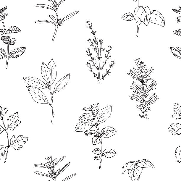 Seamless pattern with hand drawn spicy herbs. Monochrome kitchen background Seamless pattern with hand drawn spicy herbs. Black and white kitchen background with fresh seasoning in sketch stile. Vector illustration lavender plant stock illustrations