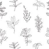 Seamless pattern with hand drawn spicy herbs. Monochrome kitchen background