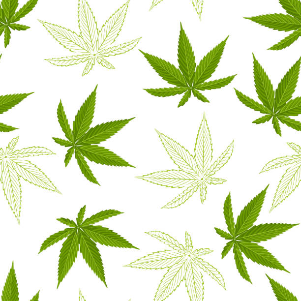 Seamless pattern with hemp leaves isolated on white background. Vector illustration of a green cannabis leaf in cartoon flat style and sketch. Seamless pattern with hemp leaves isolated on white background. Vector illustration of a green cannabis leaf in cartoon flat style and sketch. marijuana stock illustrations