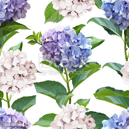 Seamless pattern with Hydrangea Flowers and leaves. Realistic style floral background. Spring fresh texture.Vector illustration.