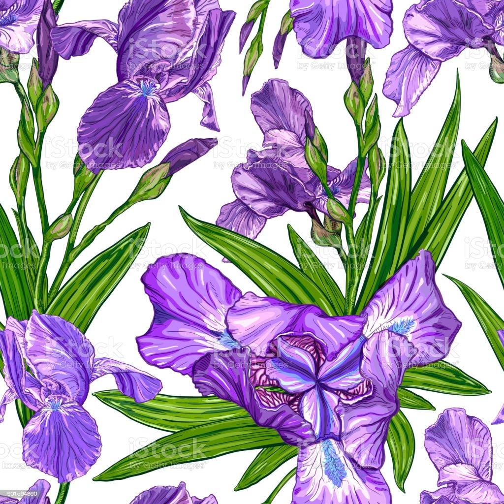 Seamless pattern with iris flowers stock vector art more images of seamless pattern with iris flowers royalty free seamless pattern with iris flowers stock vector art izmirmasajfo