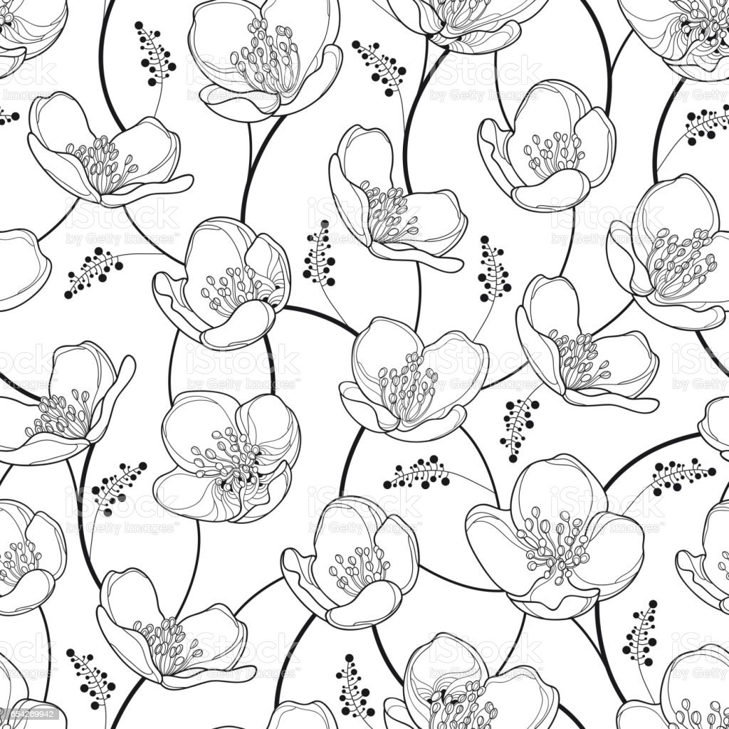 Seamless pattern with jasmine flowers in black on the white seamless pattern with jasmine flowers in black on the white background royalty free seamless mightylinksfo