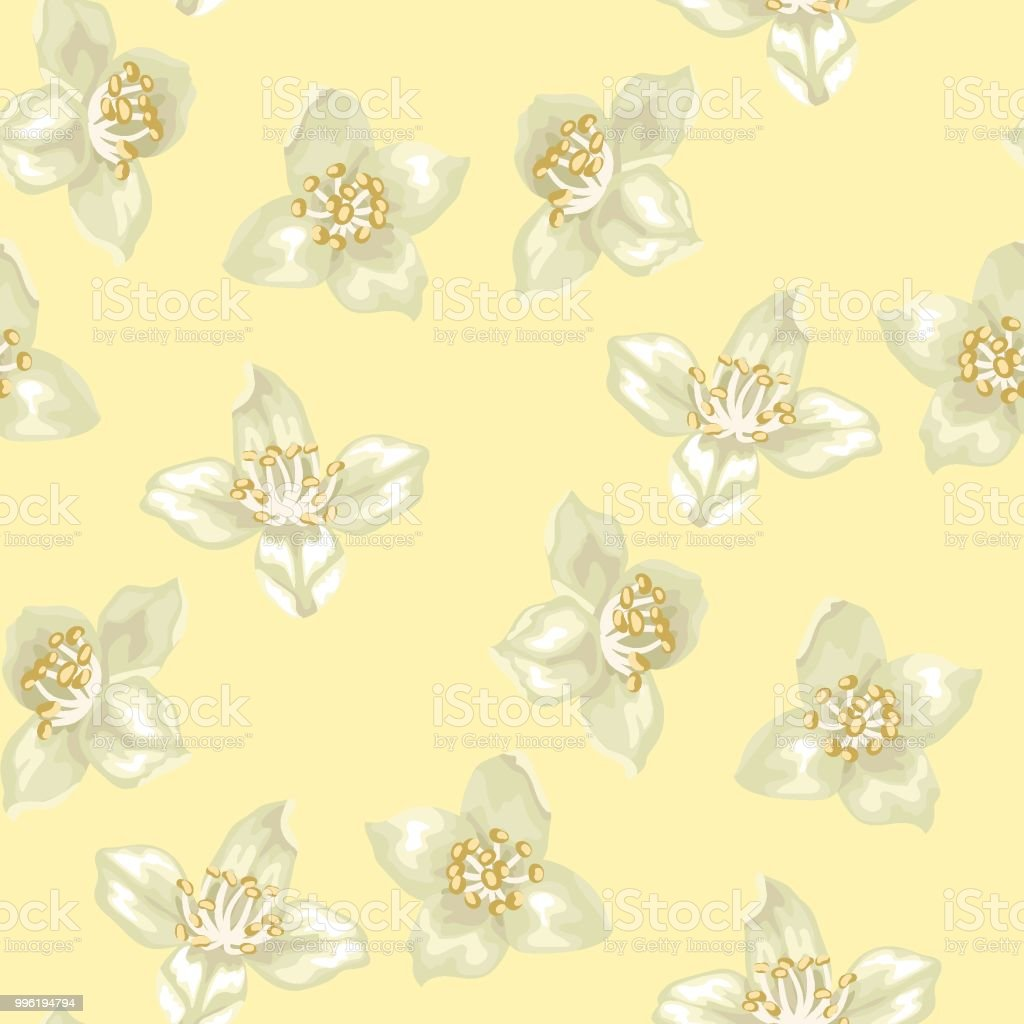 Seamless pattern with jasmine flowers stock vector art more images seamless pattern with jasmine flowers royalty free seamless pattern with jasmine flowers stock vector art izmirmasajfo
