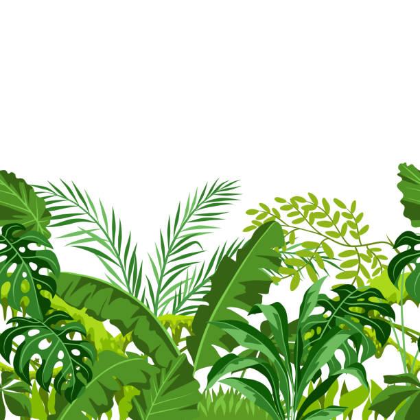 Seamless pattern with jungle plants. Seamless pattern with jungle plants. Tropical leaves. Woody natural rainforest. amazon stock illustrations
