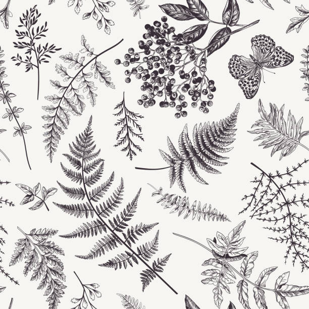 Seamless pattern with leaves and butterfly. Floral seamless pattern in vintage style. Various leaves of ferns, blackberry and butterfly. Vector botanical illustration. Black and white. butterfly insect stock illustrations