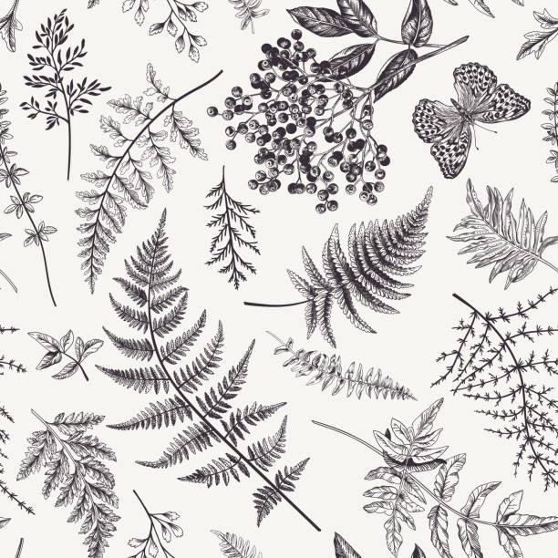 stockillustraties, clipart, cartoons en iconen met naadloos patroon met bladeren en vlinder. - varen