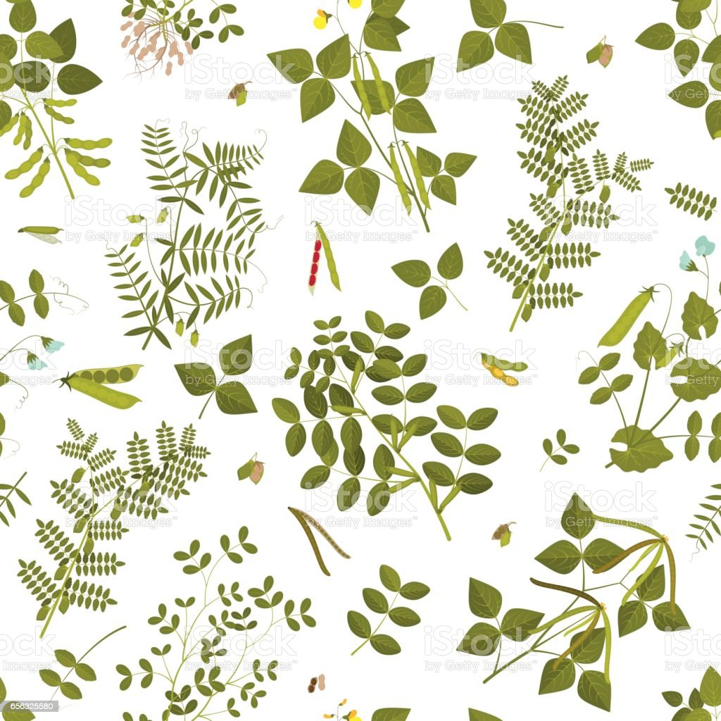 Seamless pattern with legumes plants and its leaves, pods and flowers. Vector illustration. vector art illustration
