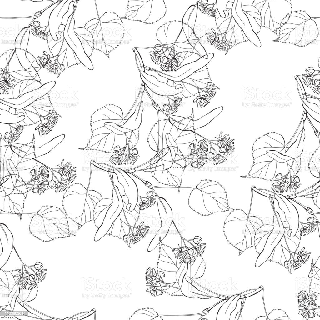 Linden branches. Floral abstract background. Vector illustration....