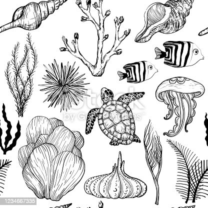 Seamless pattern with marine hand drawn corals and marine life, Black and white. Vector illustration