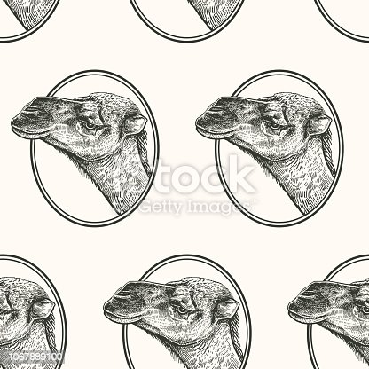 Camel. Seamless pattern with portrait animals of Africa. Hand drawing of wildlife. Vector illustration art. Black and white. Old engraving. Vintage. Design for fabrics, paper, textiles, fashion.