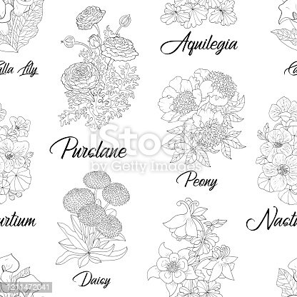 Seamless pattern with Purslane, Peony, Aquilegia, Daisy, Calla, Lily, Nasturtium flower. Black and white vector botanical illustration, line art graphic drawing. See my full collection of flowers.