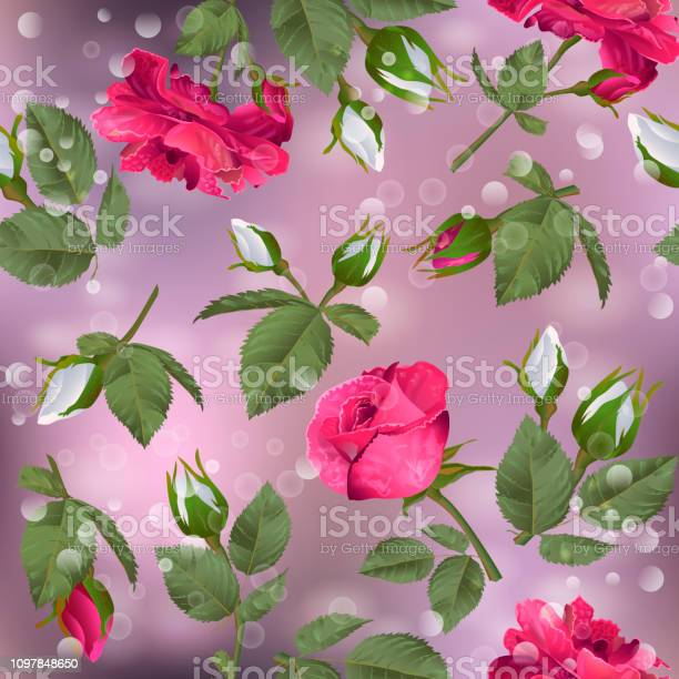 Seamless pattern with roses vector id1097848650?b=1&k=6&m=1097848650&s=612x612&h=ych28gmvftol8k ljihzvfc1sjf1dy4vi6lc35f846o=