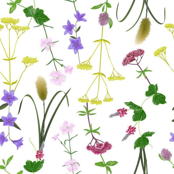 illustrazioni stock, clip art, cartoni animati e icone di tendenza di seamless pattern with seven herbs - miscanthus sinensis