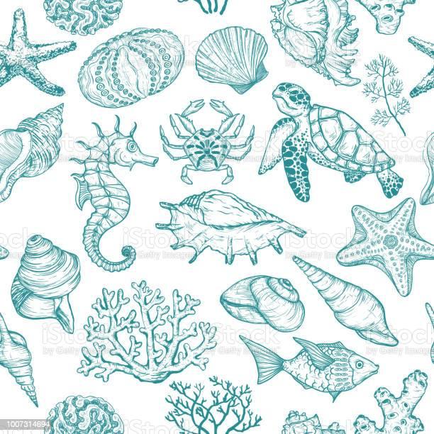Naadloze Patroon Met Schets Van Seal Oceaan Leven Organismen Schelpen Vissen Koralen En Schildpad Stockvectorkunst en meer beelden van Abstract