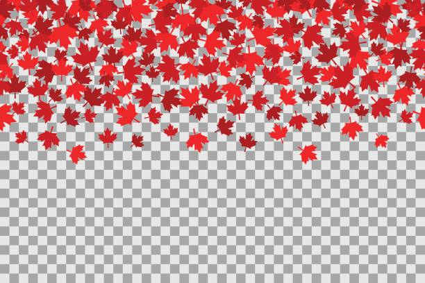 Seamless pattern with stars for 1st of July celebration on transparent background. Canada Day Seamless pattern with stars for 1st of July celebration on transparent background. Vector Illustration. Independence Day of Canada. maple leaf stock illustrations