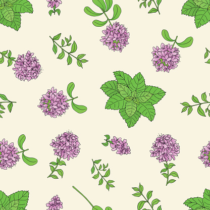 seamless pattern with thyme -03