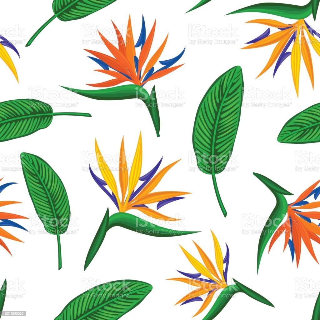 Modele Sans Couture Avec Tropical Exotique Fleur Oiseau Du Paradis