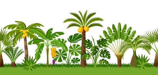 Nahtlose Muster mit tropischen Palmen. Exotische tropische Pflanzen Illustration der Dschungel Natur – Vektorgrafik
