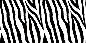 Seamless pattern with zebra fur print. Animal leather wallpaper. Vector illustration.