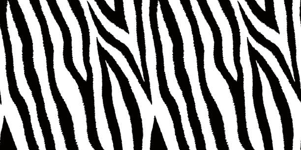 ilustrações de stock, clip art, desenhos animados e ícones de seamless pattern with zebra fur print. animal leather wallpaper. vector illustration. - padrões zebra