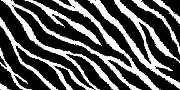 Seamless pattern with zebra print. Vector illustration. Animal fur texture. Seamless pattern with zebra print. Vector illustration. Animal fur texture. animal markings stock illustrations